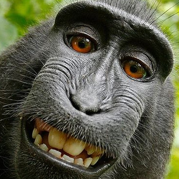 selfie-macaca-nigris